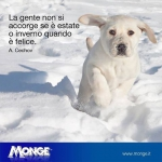 Monge puppies mongesfriends labrador snow neve 2015