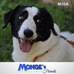 Musa uno sguardo che parla mongesfriends mongeofficial monge pet petfoodhellip