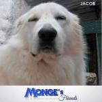 Jacob 40 chili di morbidezza mongesfriends mongeofficial monge pet petfoodhellip