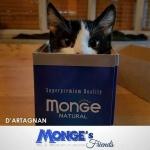 Non importa quanto  piccola una scatola il gatto riescehellip