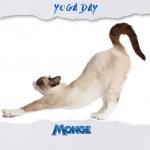 Impariamo dai veri maestri larte della flessibilit monge mongeofficial yogadayhellip