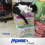 Tyson dello Zoomarket di Fondi sceglie attentamente dove dormire mongesfriendshellip
