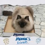 Che nessuno si avvicini alla mia scatola! mongesfriends cat mongehellip