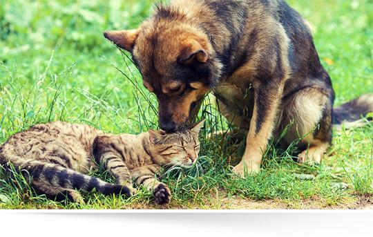 Alimenti sicuri animali
