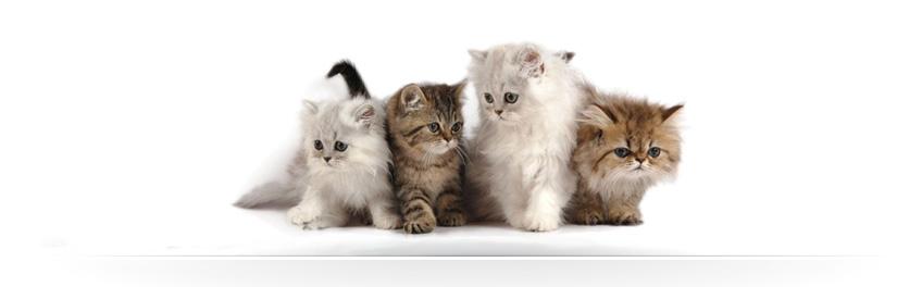 Alimenti Per Gatto Prodotti Gatto Monge Secco Gatto Umido Gatto