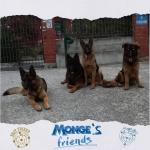 4 cani  meglio di 1! mongesfriends dog monge mongeofficialhellip