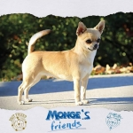 Piccole dimensioni grande temperamento mongesfriends dog monge mongeofficial pet petfoodhellip