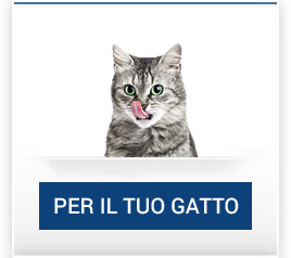 catalogo_gatto