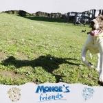 Running day mongesfriends dog monge mongeofficial pet petfood nutrition croquetteshellip