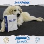 Noblesse oblige Josephine della Rocca dei Patous mongesfriends dog mongehellip