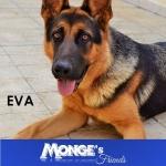 La nostra Eva! mongesfriends monge dog petfood