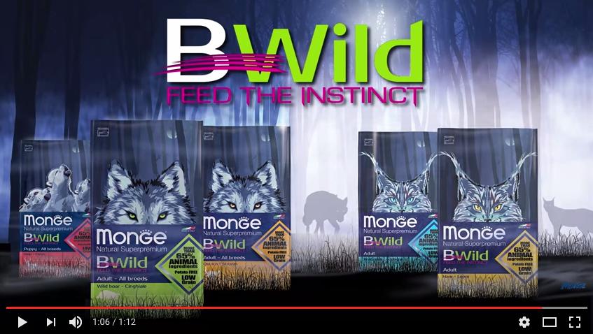 Monge-BWild-video