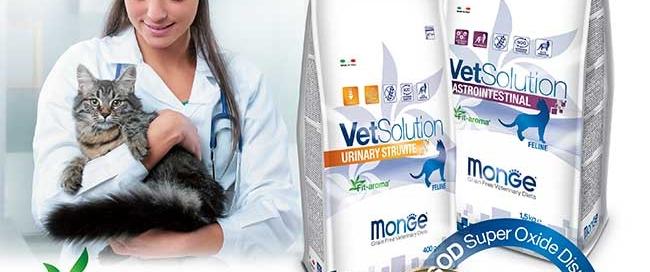 vetsolution-gatto