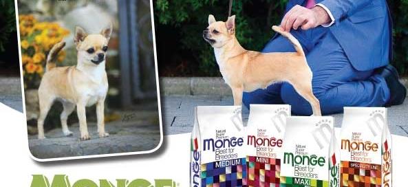 monge_breeders-della-citta-eterna