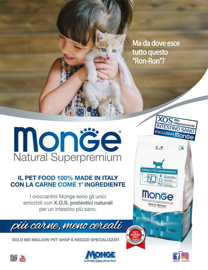 monge_gatto