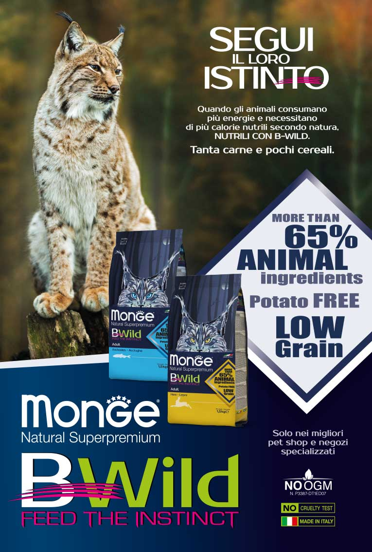 Monge-BWILD-GATTO