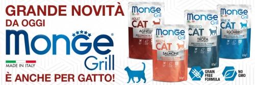 news grill cat2