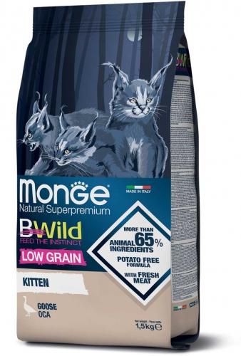 monge_gatto_secco_bwild_kitten_oca
