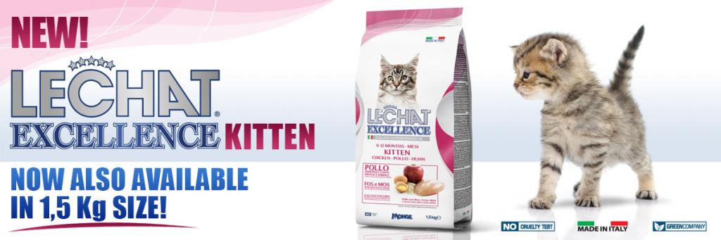 news-EXC-kitten-nuovo-formato-ENG