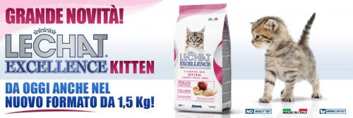 news-EXC-kitten-nuovo-formato2