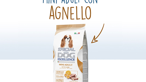 mini_adult_agnello